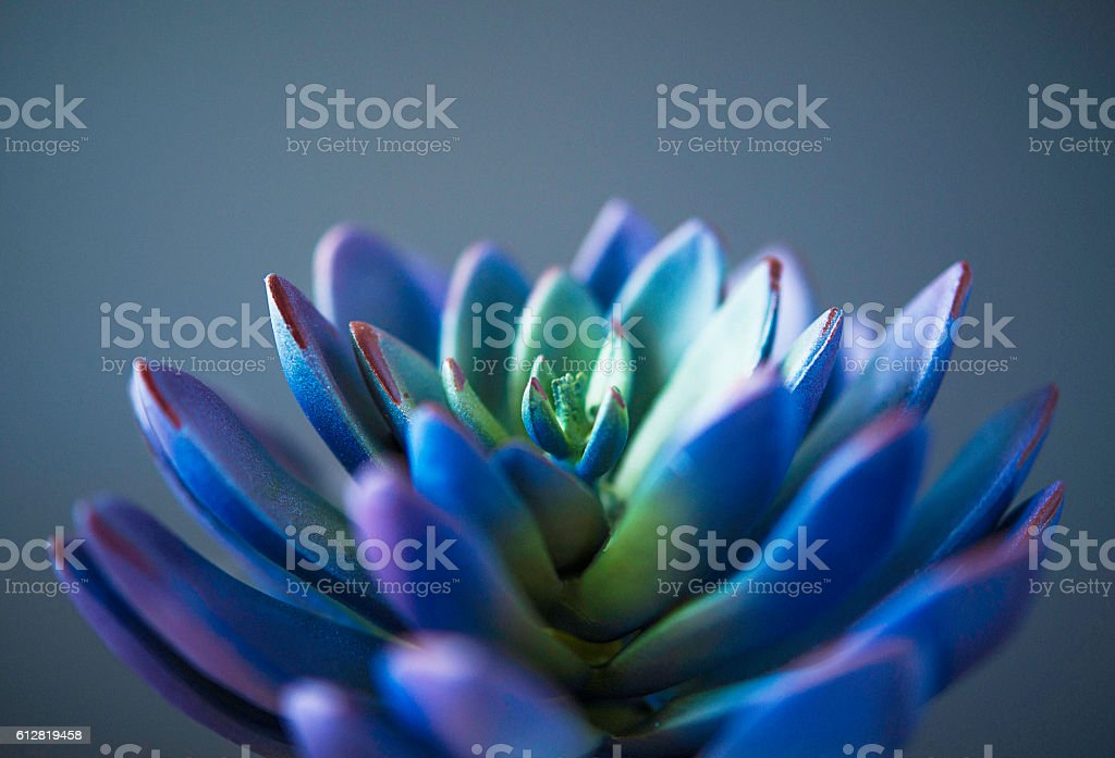 Nature still life. Cacti and succulent plants stock photo