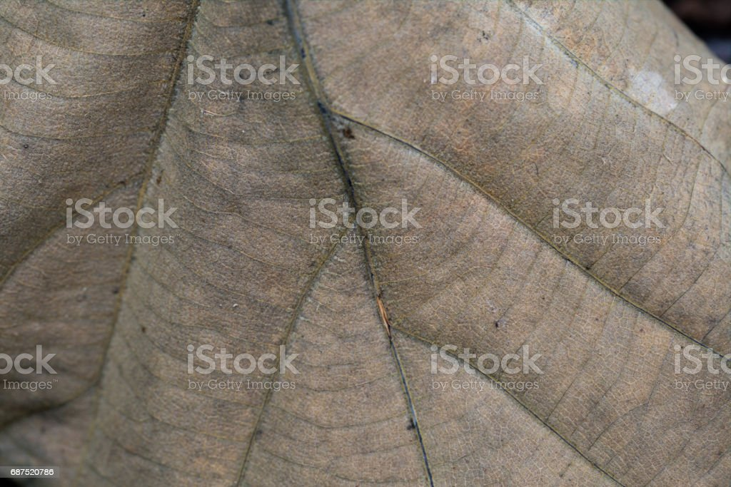 Nature Textures of dry wooden leaf, very detailed. stock photo