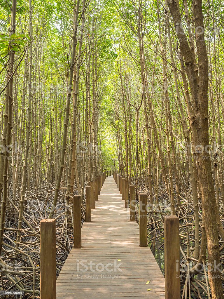 Nature trail in Mangrove national park, Gulf of Thailand stock photo