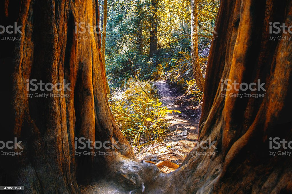 Nature Trail in Northern California stock photo