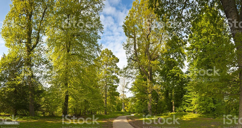 Nature trail through enchanted forest royalty-free stock photo