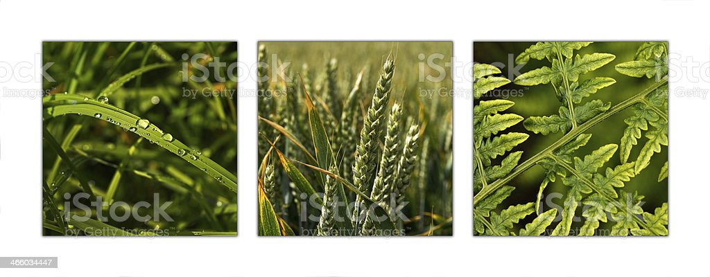 Nature Triptych stock photo