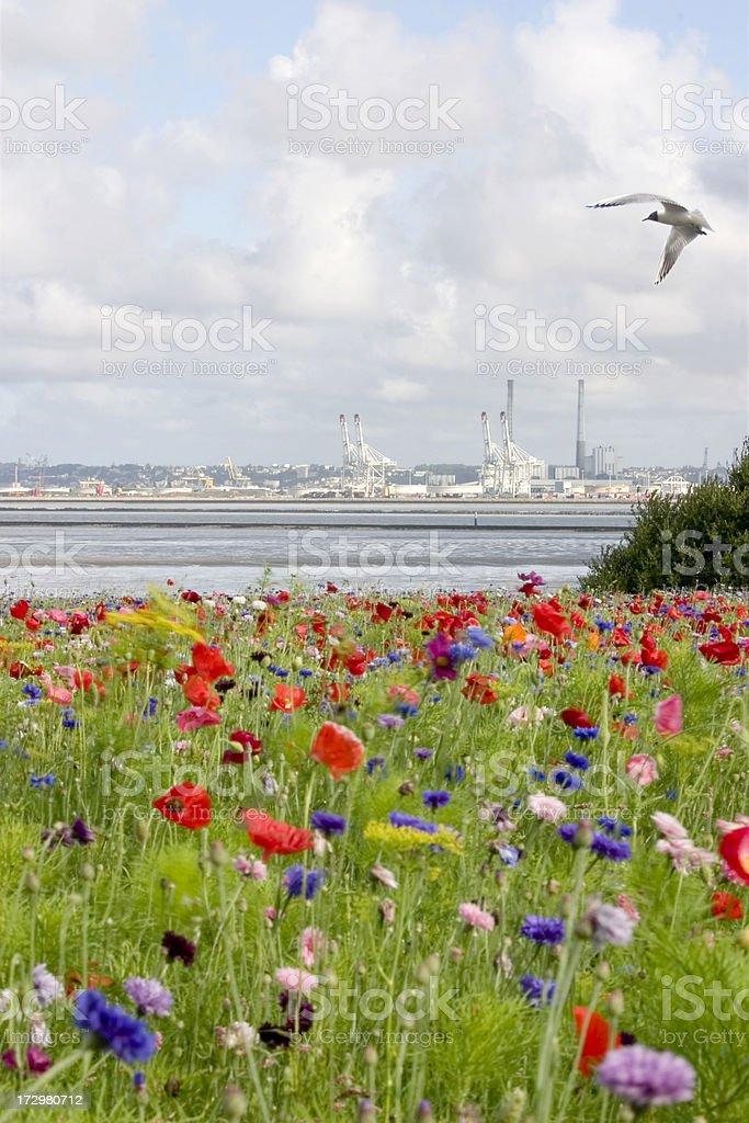 Nature versus Industry stock photo