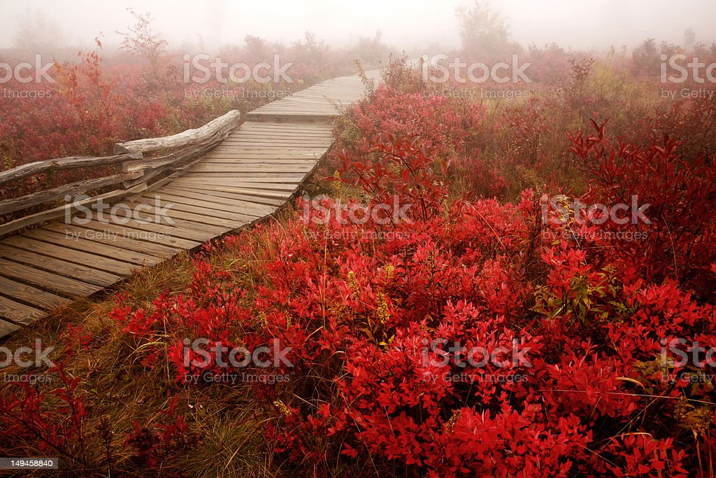 nature walk in autumn royalty-free stock photo