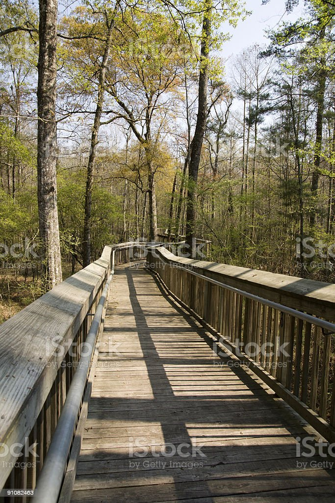 Nature Walk royalty-free stock photo