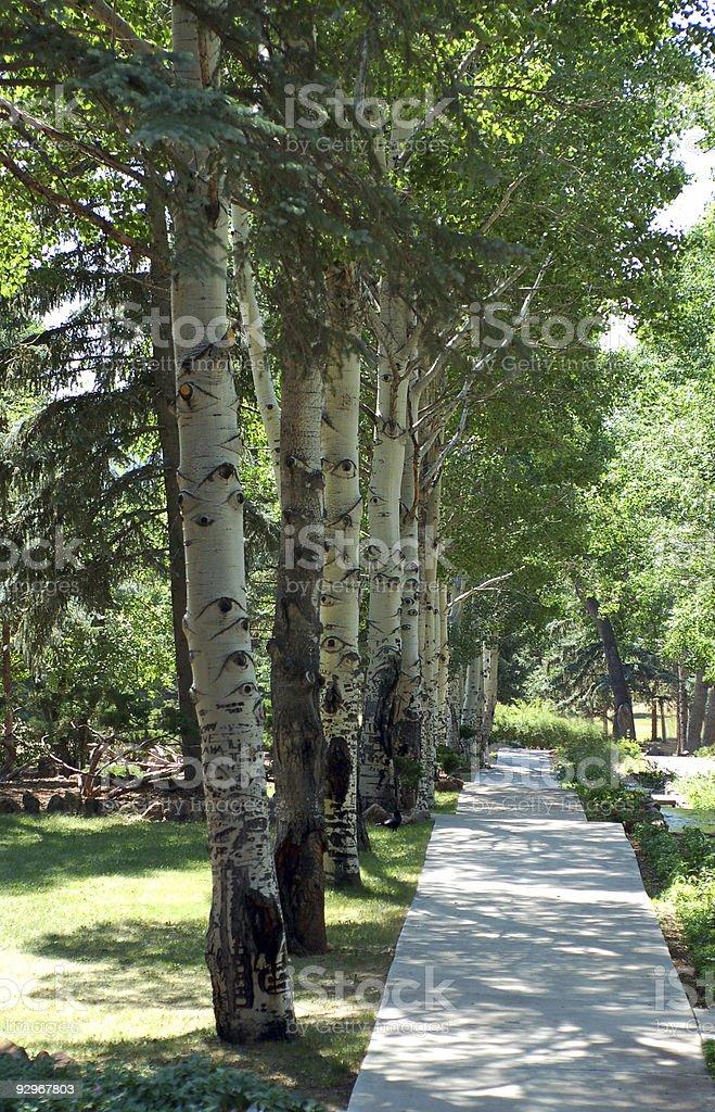 Nature Walkway stock photo