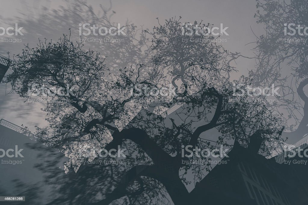 Nature Wars- Clash of the Trees stock photo