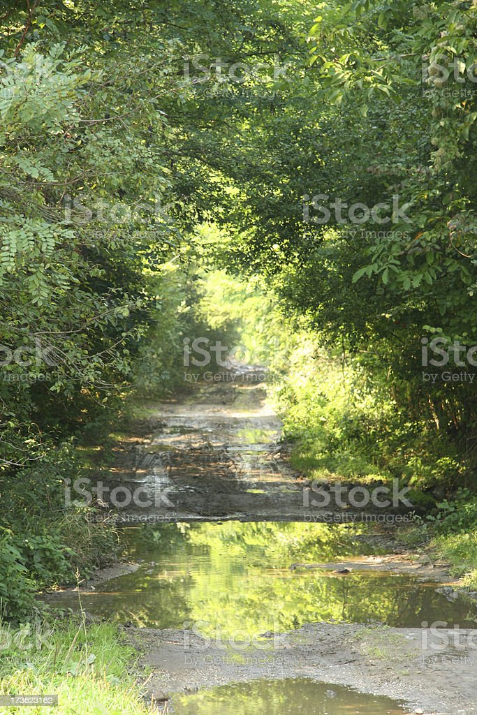 Nature Way royalty-free stock photo
