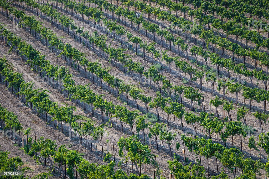Nature: Wine country stock photo