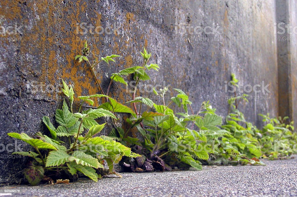 Nature Wins royalty-free stock photo