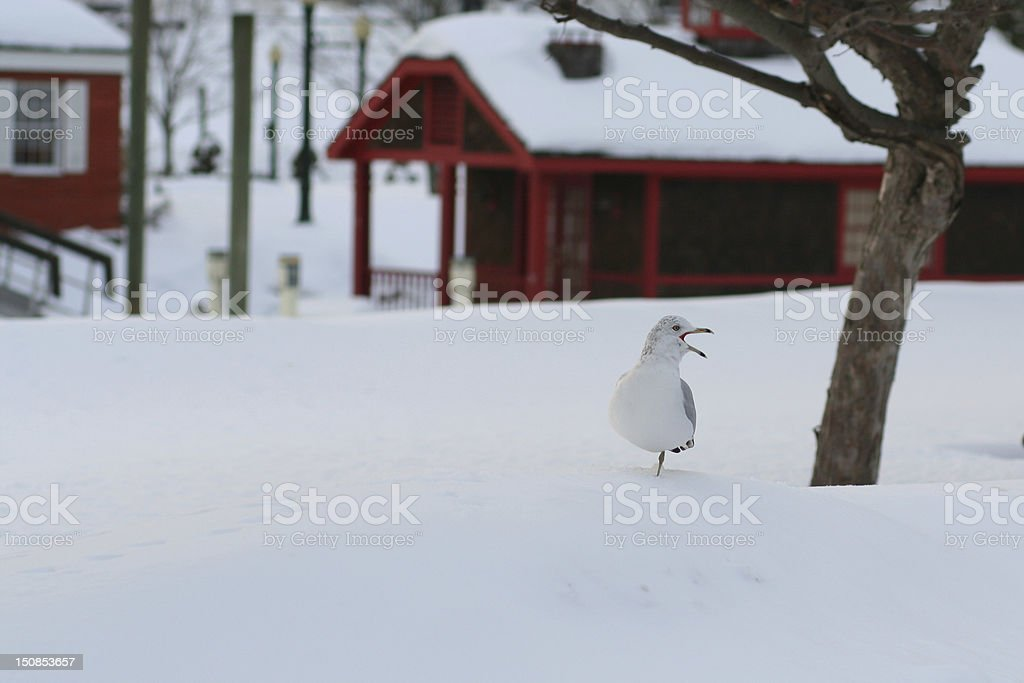 Nature: Winter and Snow stock photo