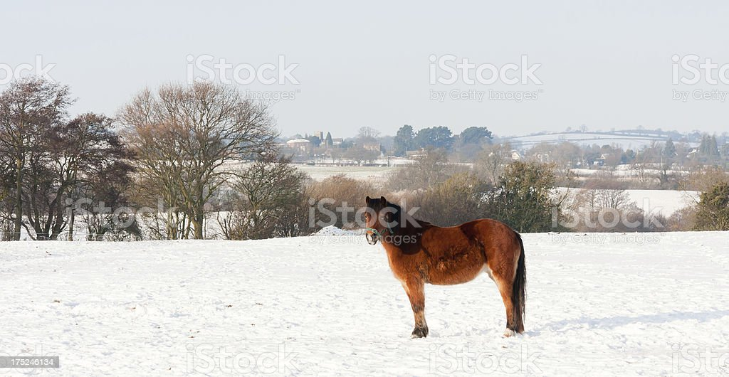 Natures beauty in wintertime royalty-free stock photo