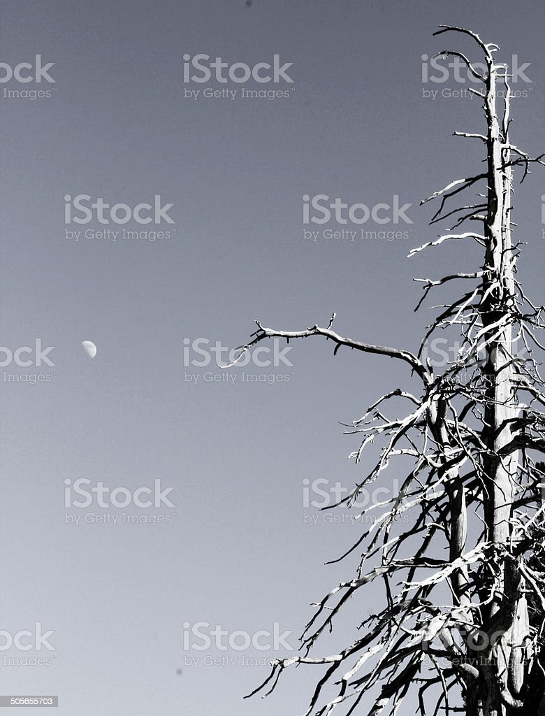 Nature's contrast royalty-free stock photo
