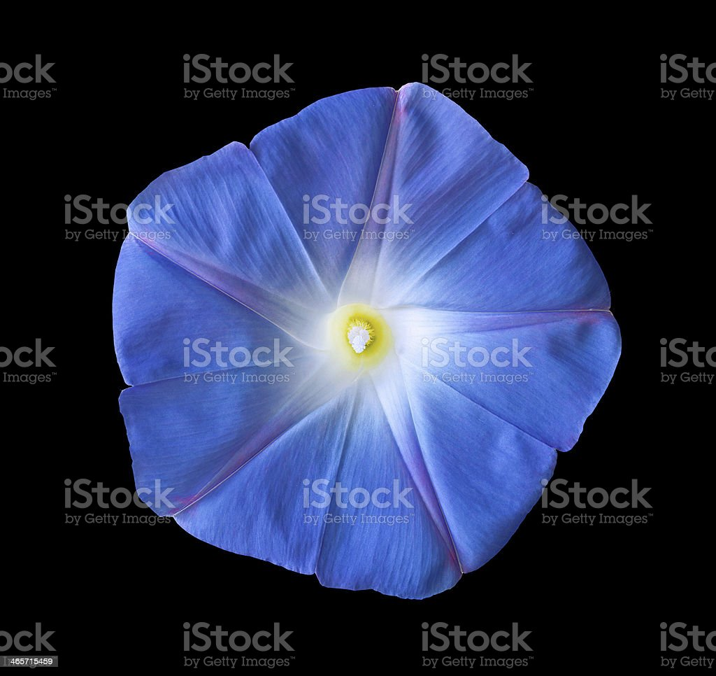 Nature's design. royalty-free stock photo