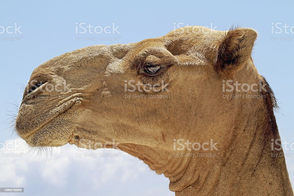 Natures Design. royalty-free stock photo