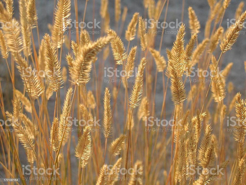 Nature's golden touch royalty-free stock photo
