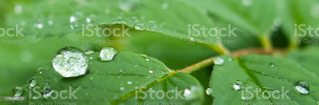 Nature's Jewel royalty-free stock photo