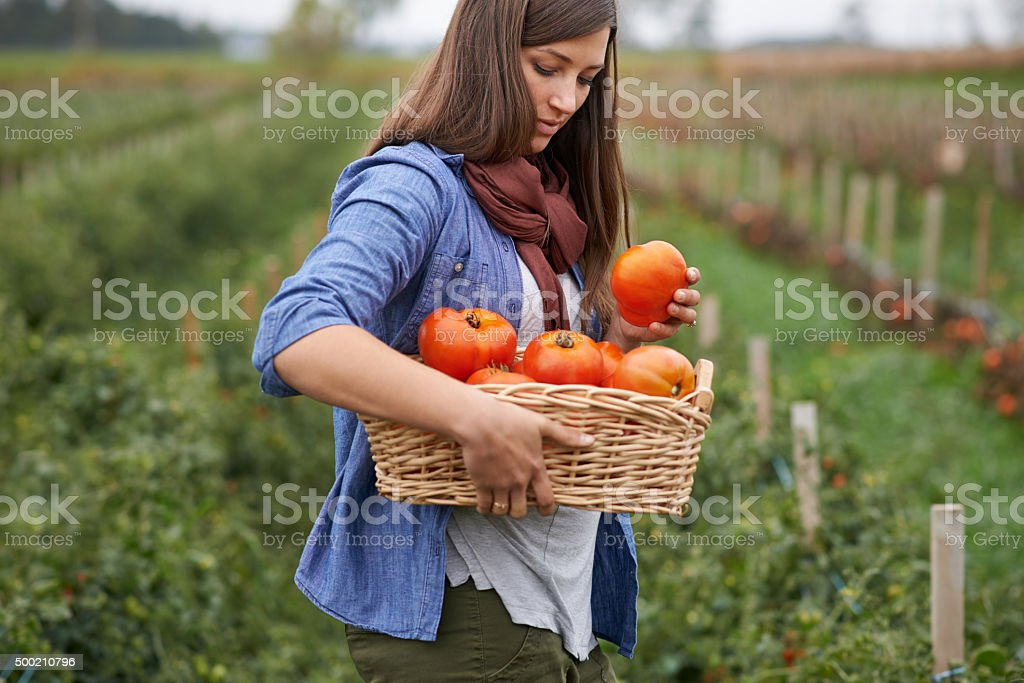 Nature's red bounty stock photo