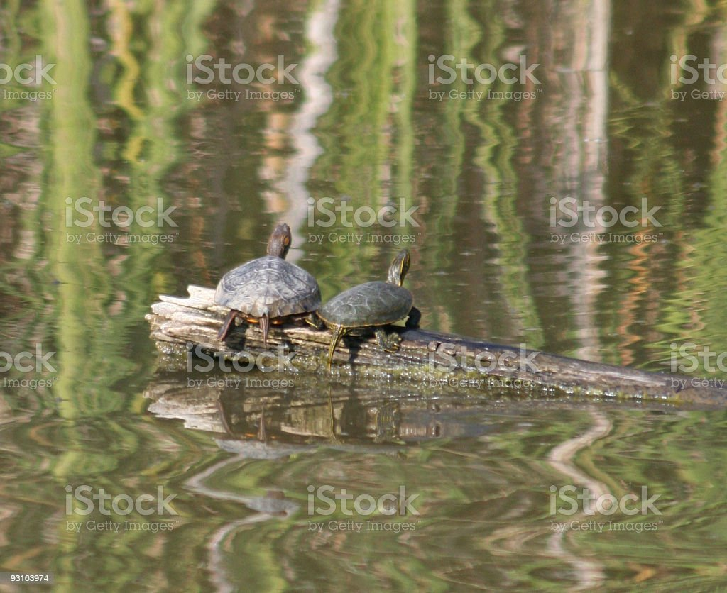 Nature's Reflections royalty-free stock photo
