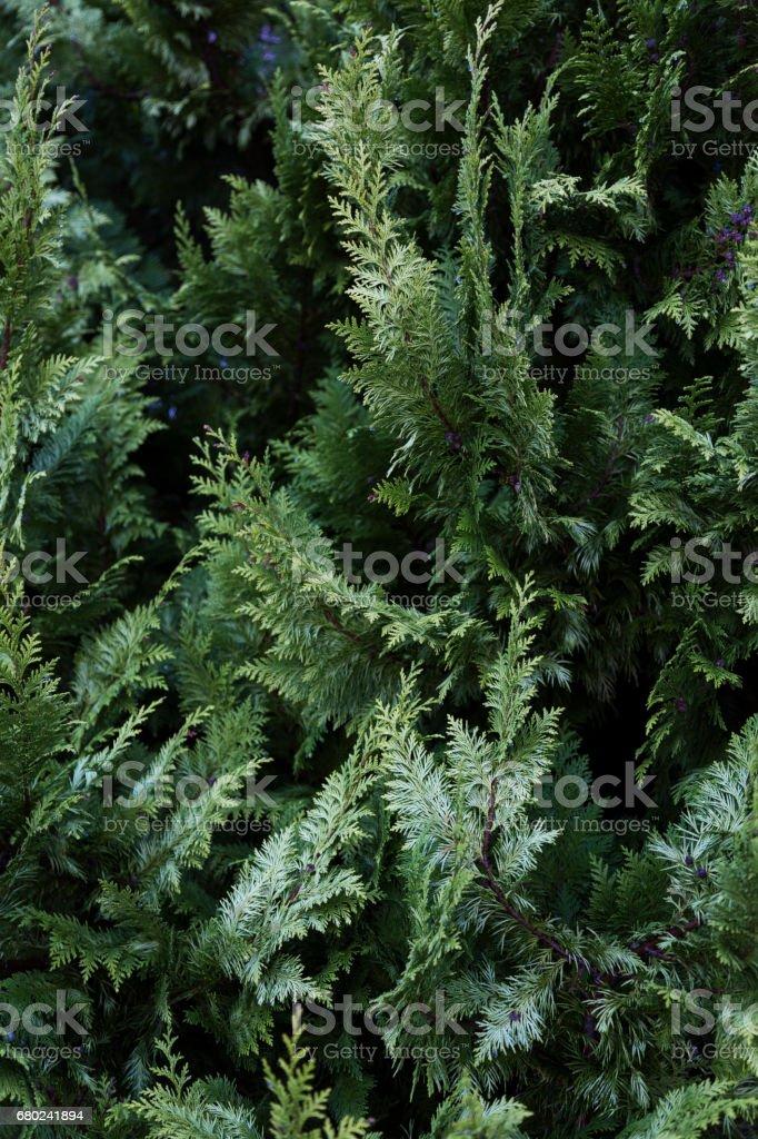 Nature's Texture stock photo