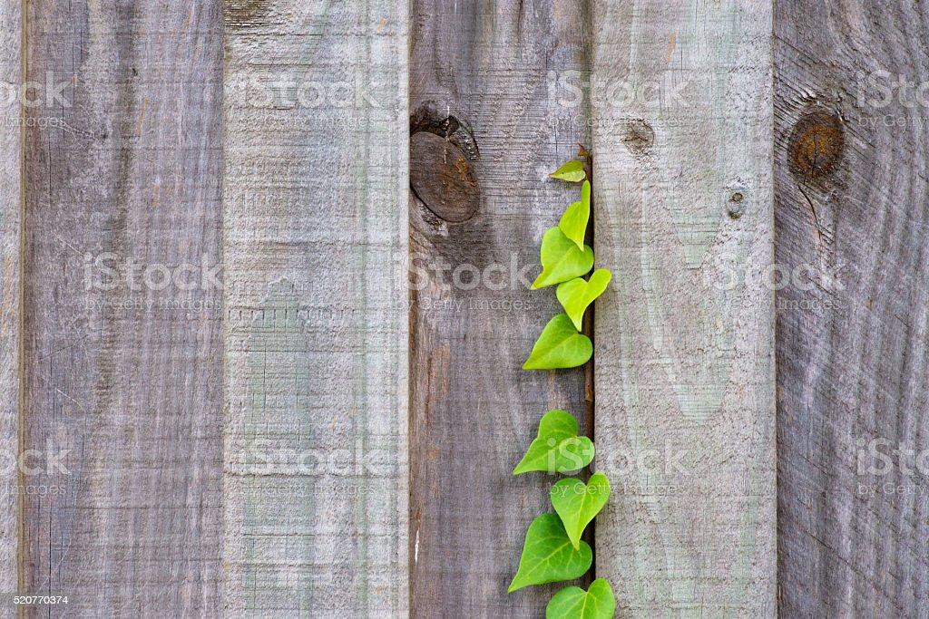 Natures way stock photo