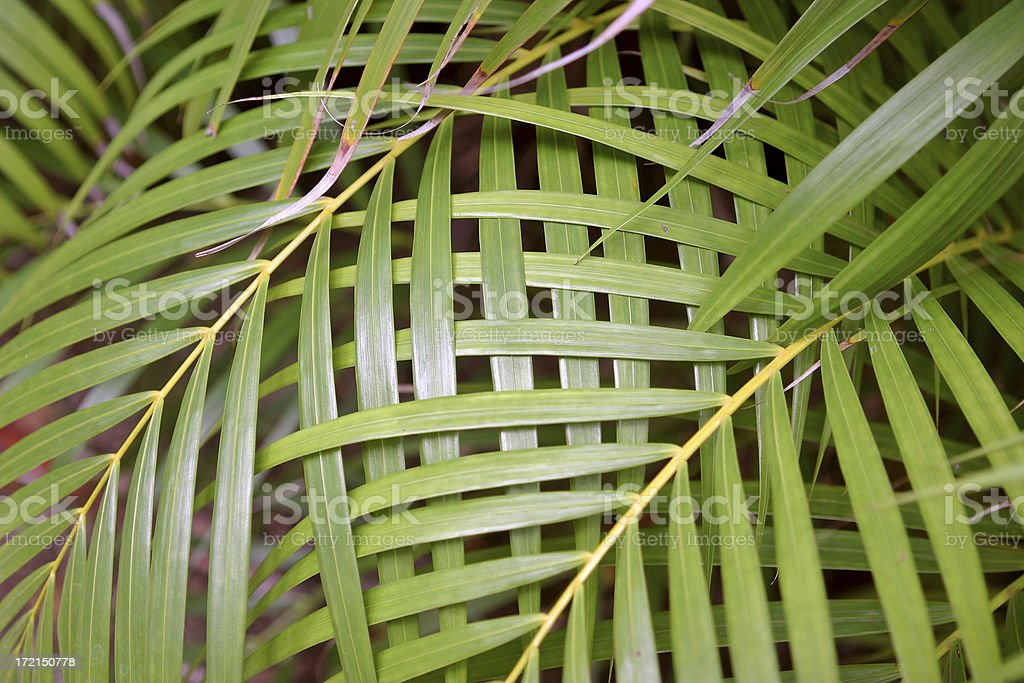 Natures Weave stock photo