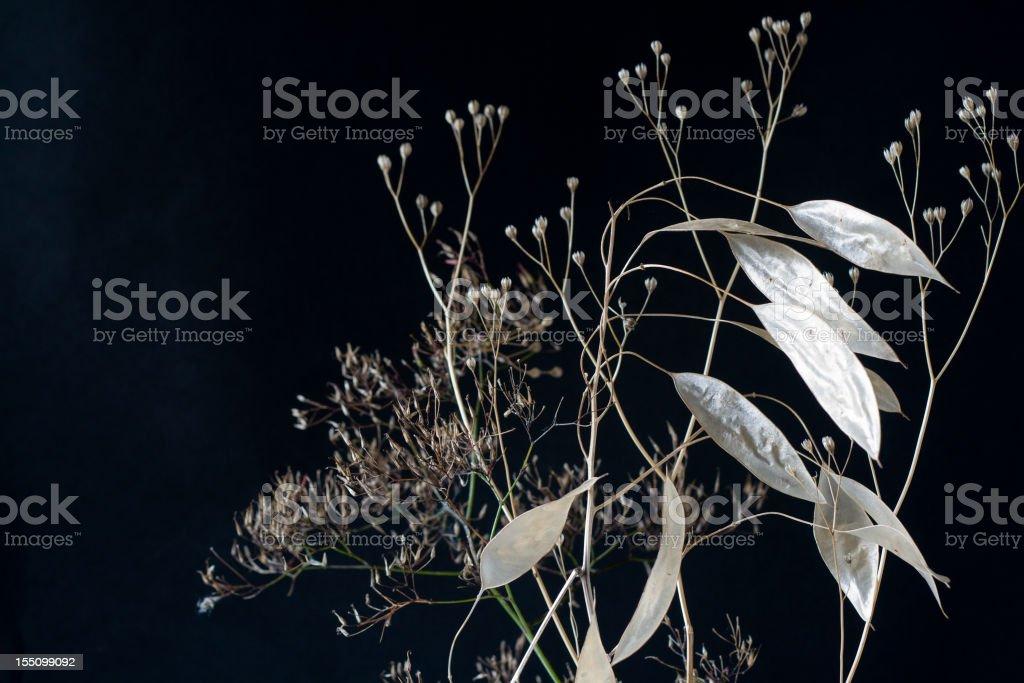 Nature's Winter Skeletons stock photo