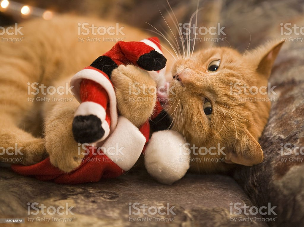 naughty cat royalty-free stock photo