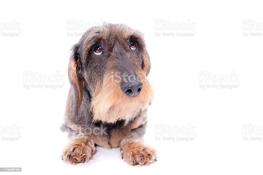 naughty dog! stock photo
