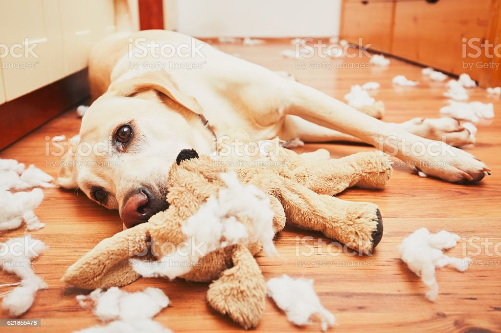 Naughty dog stock photo