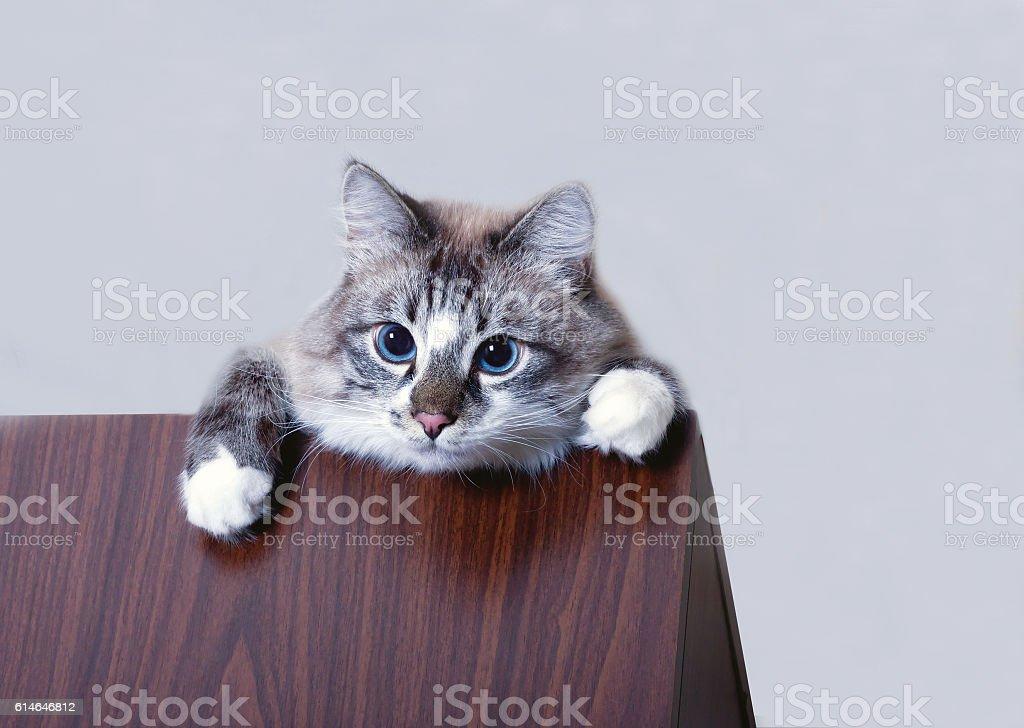 naughty funny cat stock photo