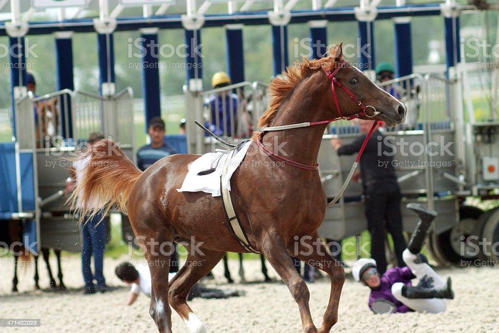 Naughty horse. royalty-free stock photo