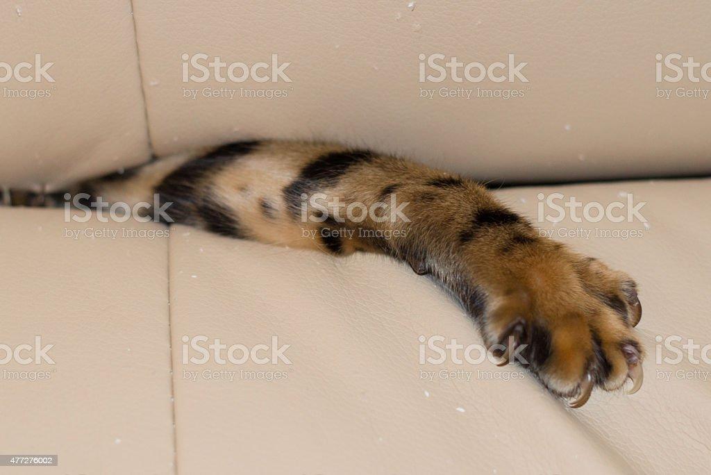 Naughty paw stock photo