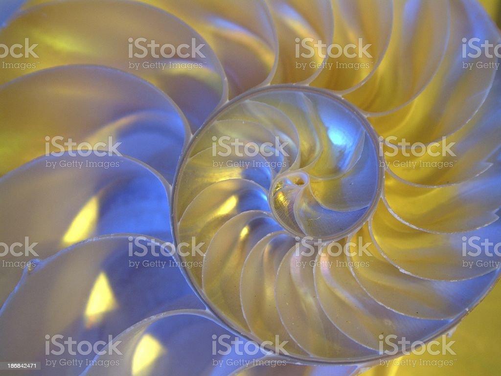Nautilus 1 stock photo