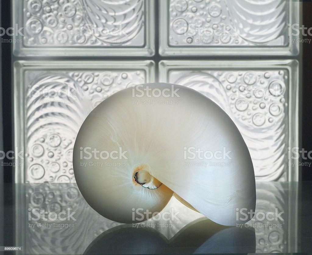 Nautilus on glass royalty-free stock photo