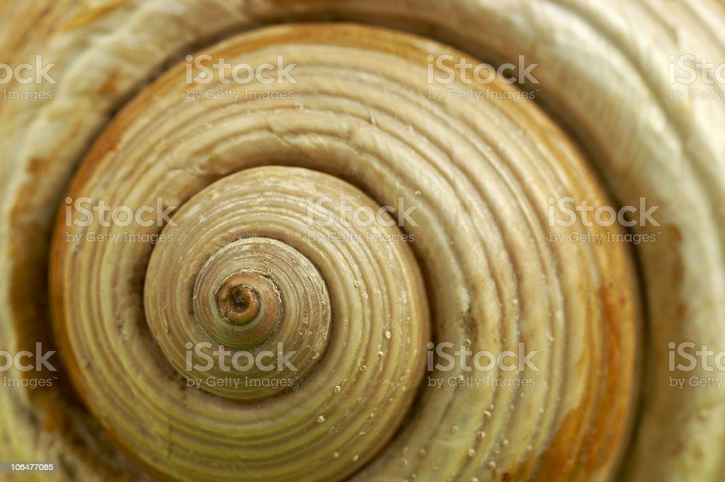 Nautilus stock photo