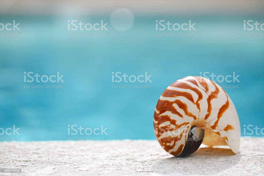 nautilus shell at resort swimming pool edge stock photo