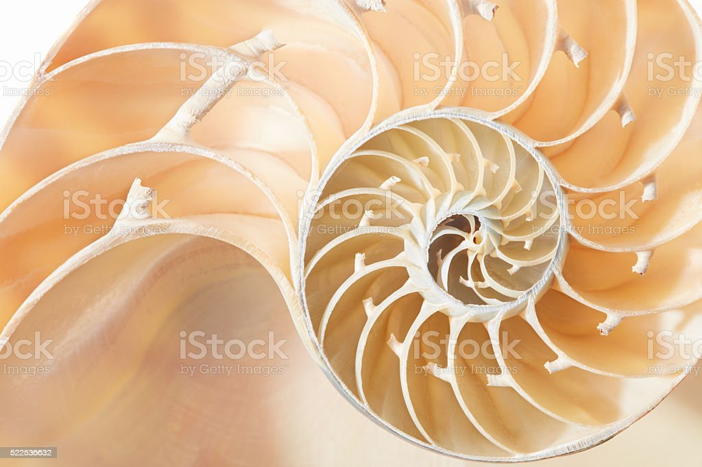 Nautilus shell golden section pattern background stock photo