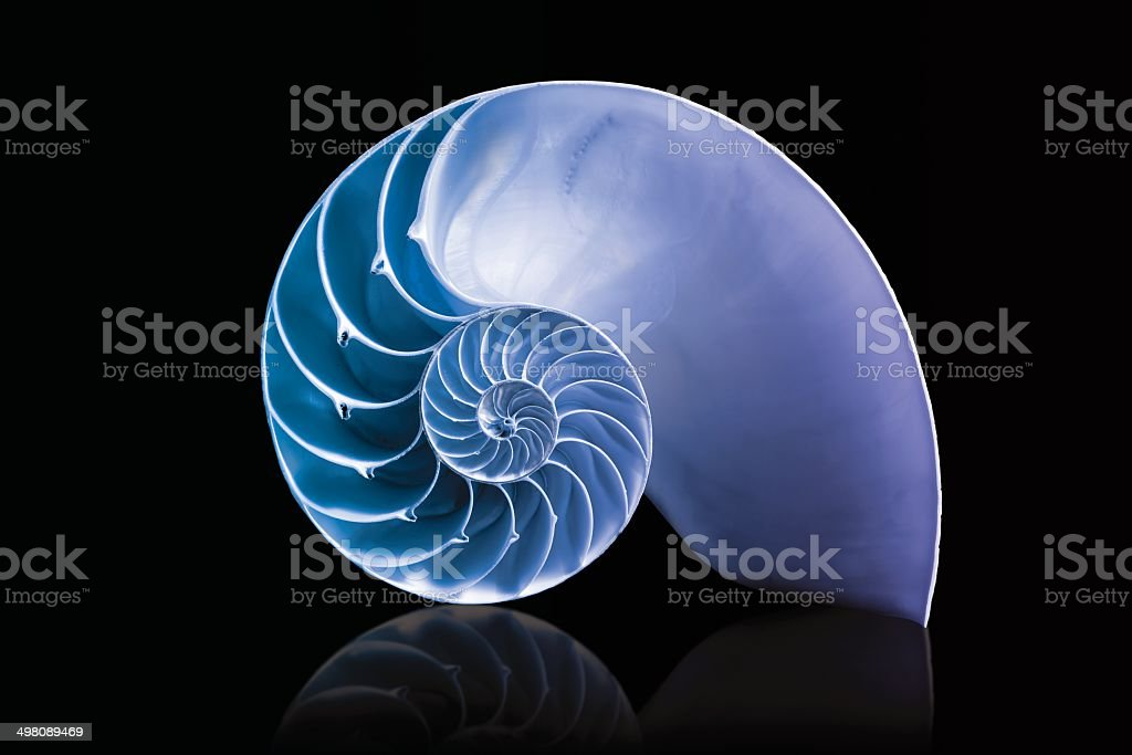 nautilus shell mathematical spiral with blue overlay duotone stock photo