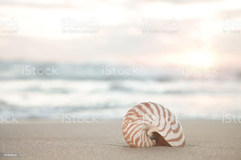 nautilus shell on beach, sunrise and  tropical sea royalty-free stock photo