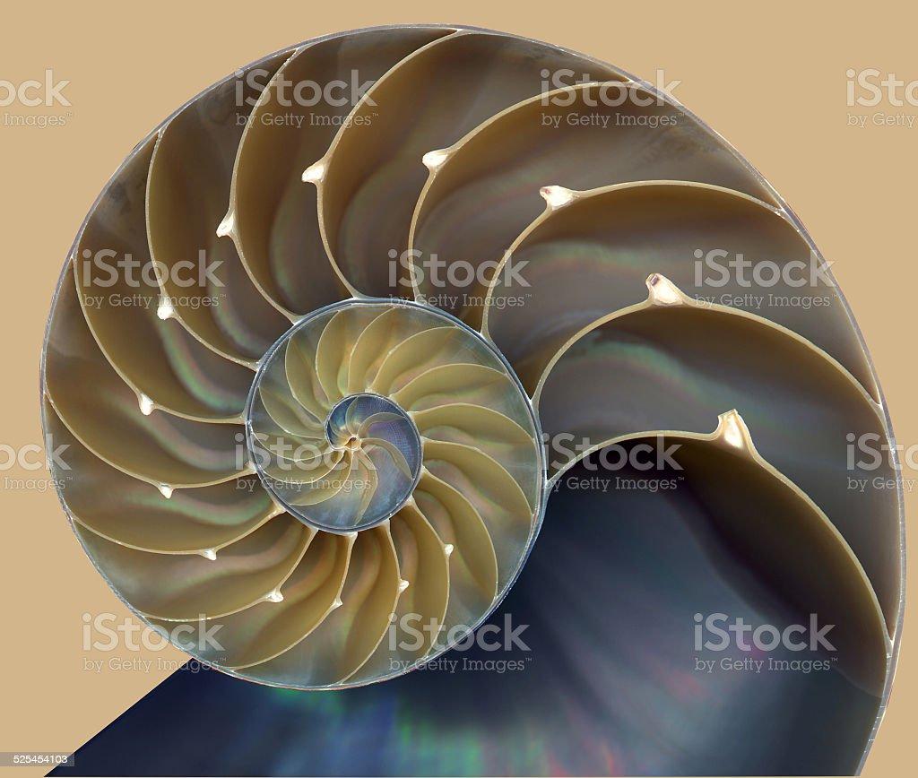 Nautilus shell pattern stock photo
