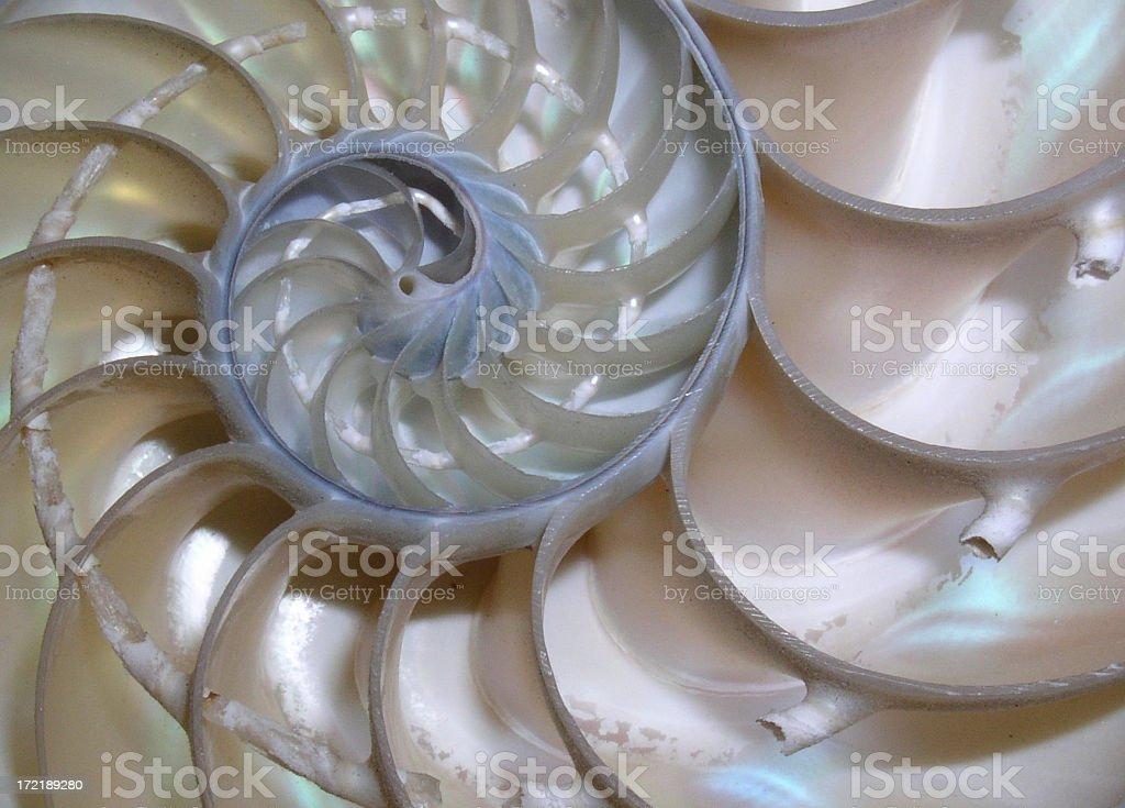 Nautilus Shell royalty-free stock photo