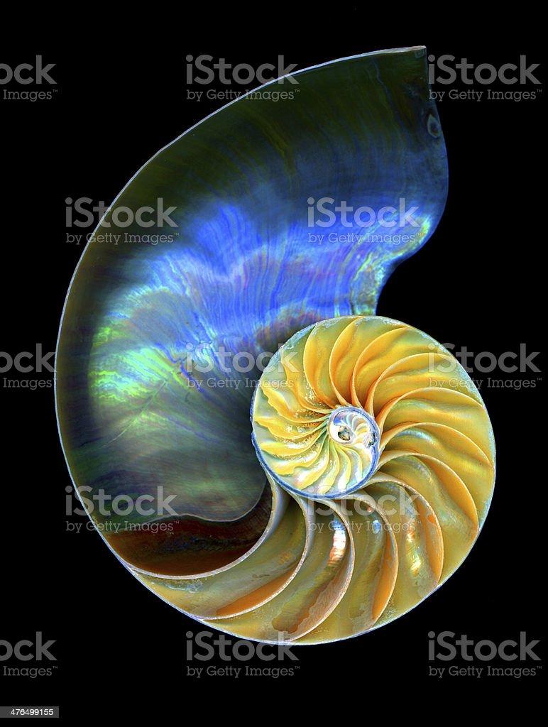 Nautilus Shell stock photo
