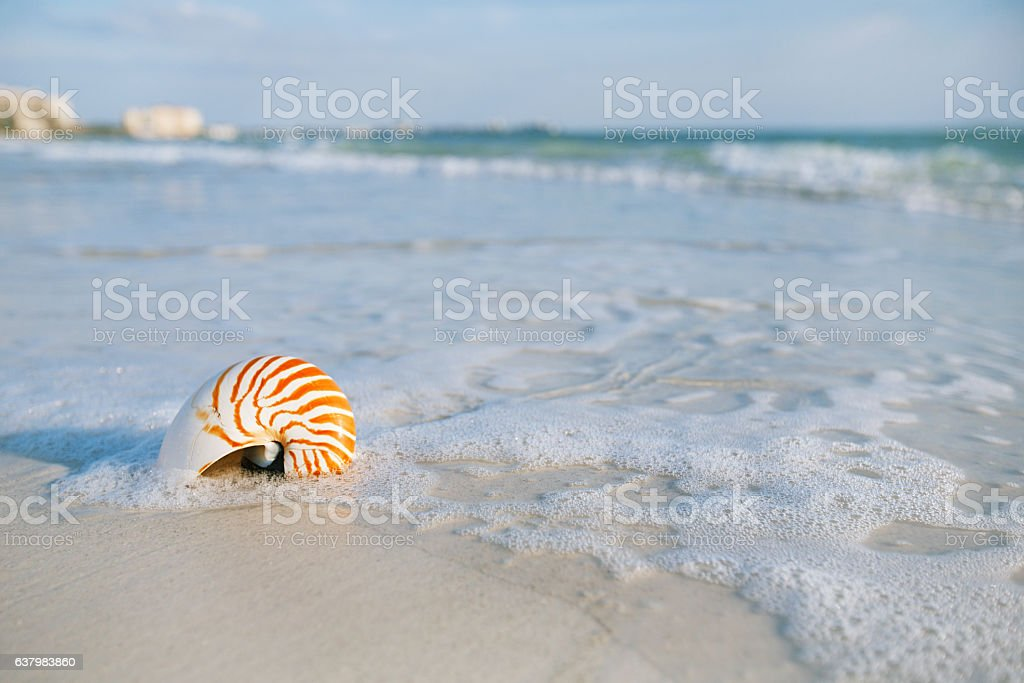 nautilus shell with sea wave,  Florida beach  under stock photo
