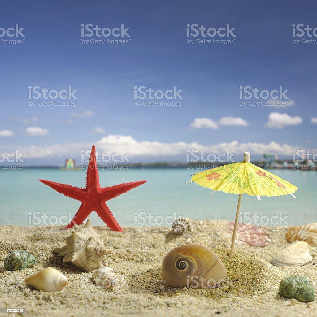 Nautilus under sun umbrela shadow royalty-free stock photo