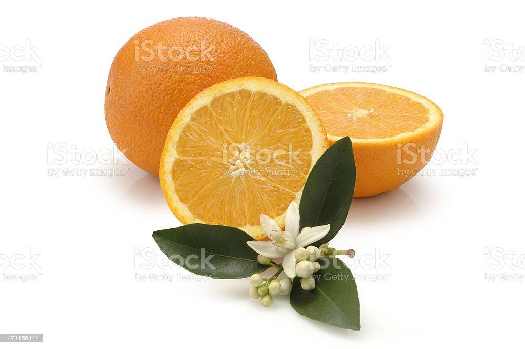 Navel Oranges stock photo