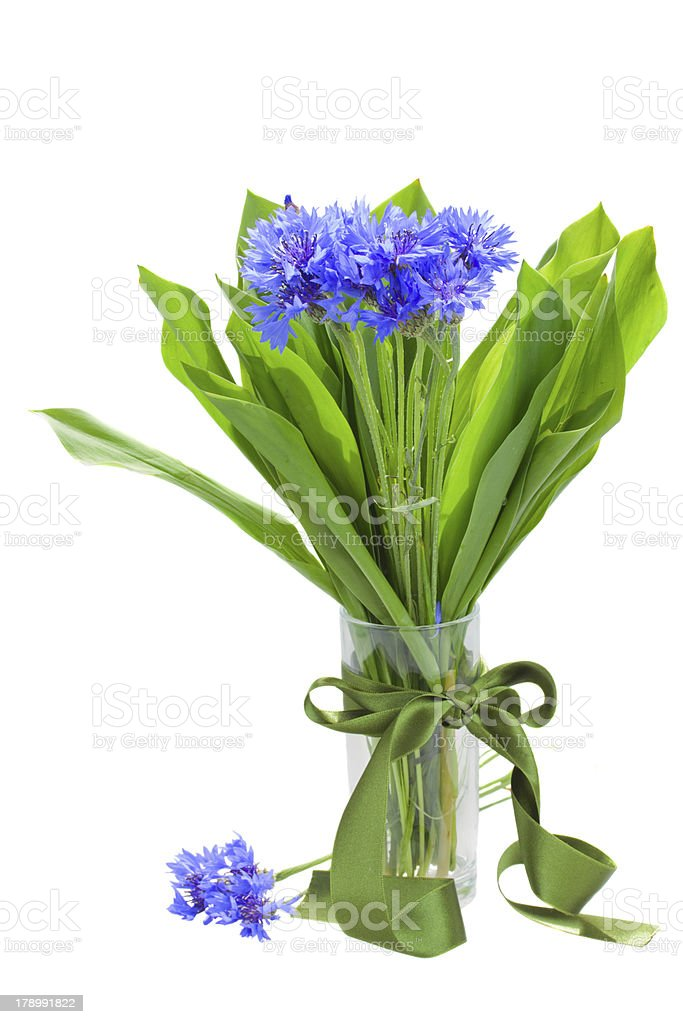 navy corn flowers bouquet in vase royalty-free stock photo