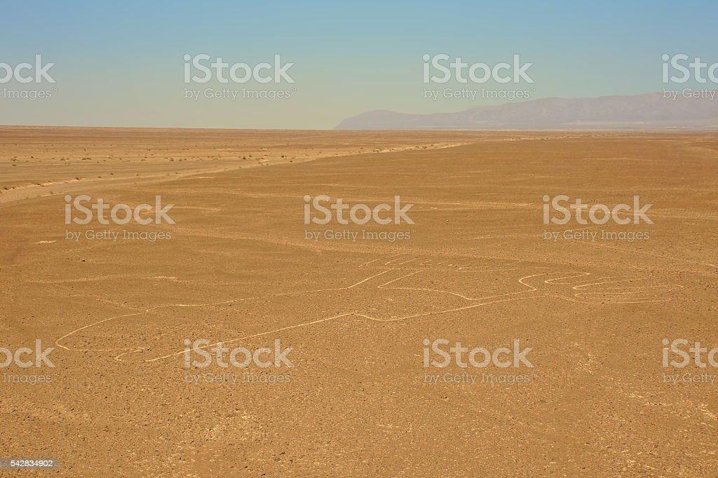 Nazca lines stock photo