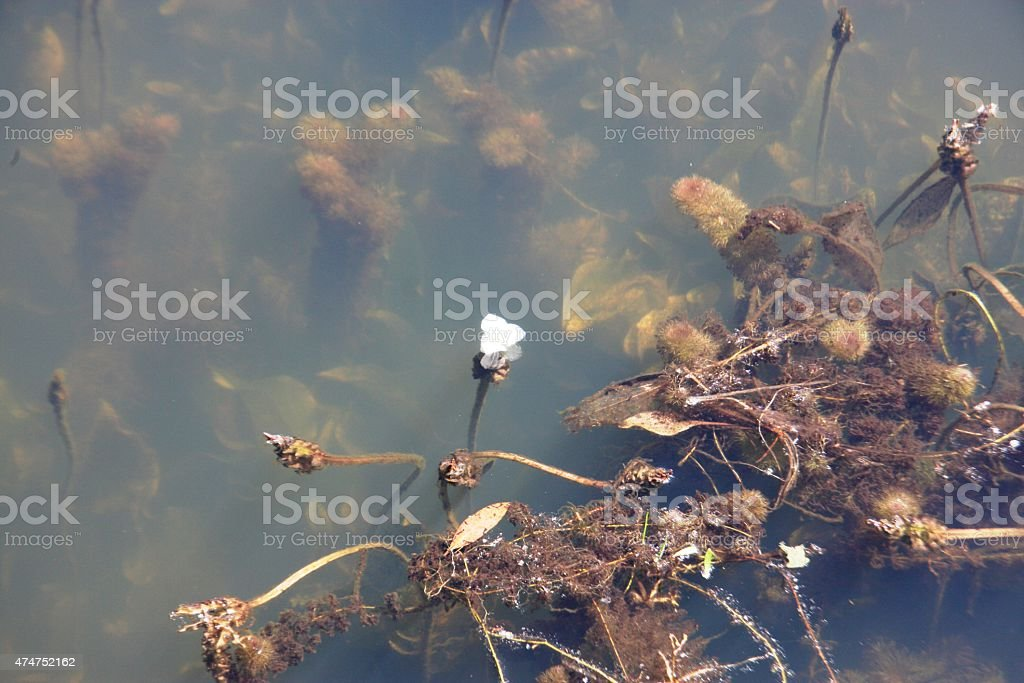 Neak Pean stock photo