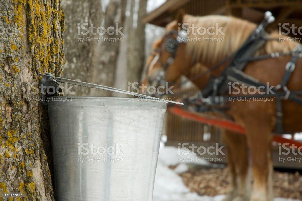 Near a sugar shack stock photo
